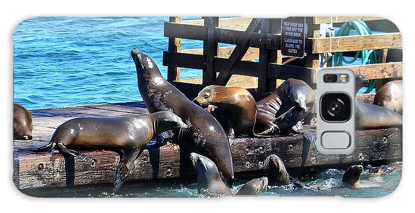 Keep Off The Dock - Sea Lions Can't Read Galaxy Case