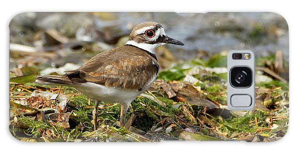 Killdeer At The Coast Galaxy Case