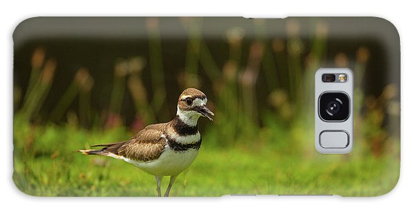 Killdeer Galaxy Case by Karol Livote