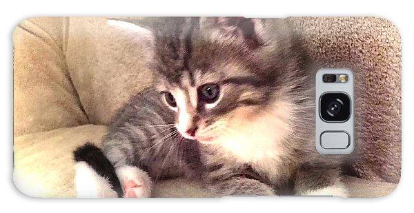 Kitten Deep In Thought Galaxy Case