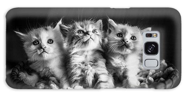 Kitten Trio Galaxy Case
