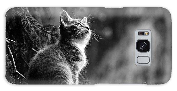 Kitten In The Tree Galaxy Case