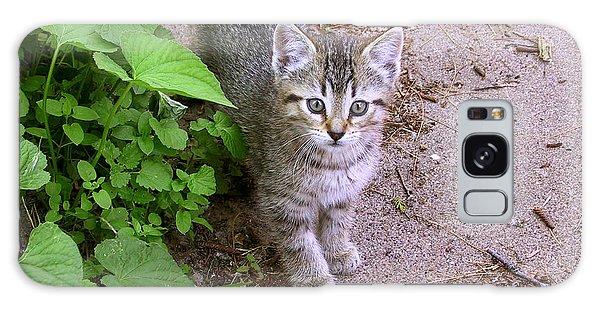 Kitten On The Patio Galaxy Case by Larry Capra