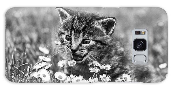 Kitten With Daisy's Galaxy Case