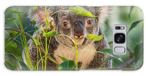 Koala Leaves Galaxy Case