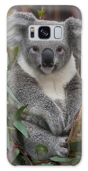 Koala Phascolarctos Cinereus Galaxy Case by Zssd