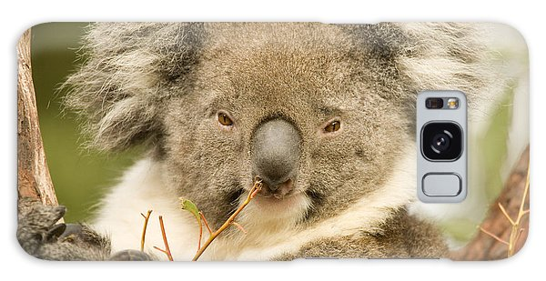 Koala Snack Galaxy Case
