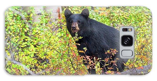 Fall Bear Galaxy Case