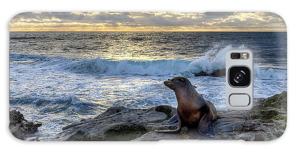 La Jolla Sea Lion Galaxy Case by Eddie Yerkish