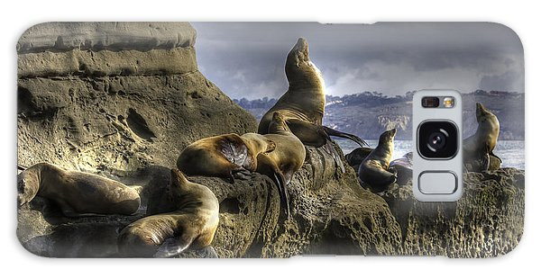 La Jolla Seals Galaxy Case