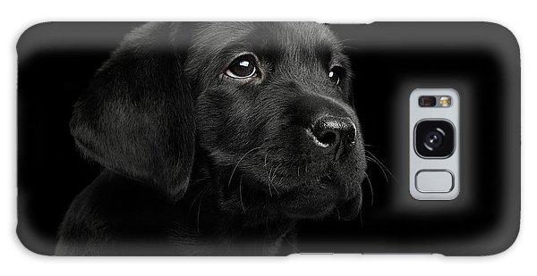 Labrador Retriever Puppy Isolated On Black Background Galaxy Case