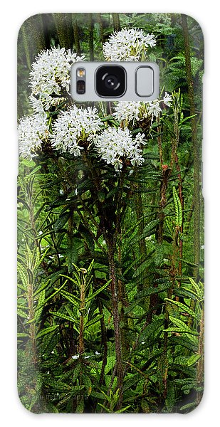 Galaxy Case featuring the photograph Labrador Tea 2017 by Fred Denner