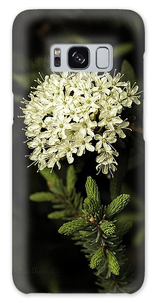 Galaxy Case featuring the photograph Labrador Tea And Spruce Buds by Fred Denner