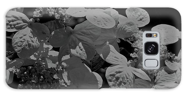 Lace Cap Hydrangea In Black And White Galaxy Case