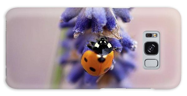 Galaxy Case - Ladybird On Norfolk Lavender  #norfolk by John Edwards