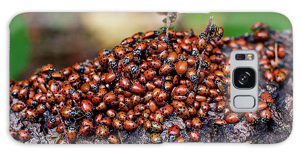 Ladybugs On Branch Galaxy Case by Garry Gay