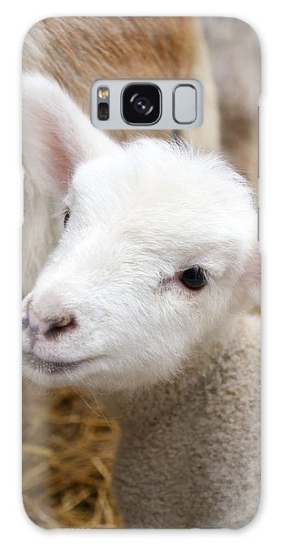 Lamb Galaxy Case
