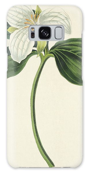 Engraving Galaxy Case - Large Flowered Trillium by Margaret Roscoe