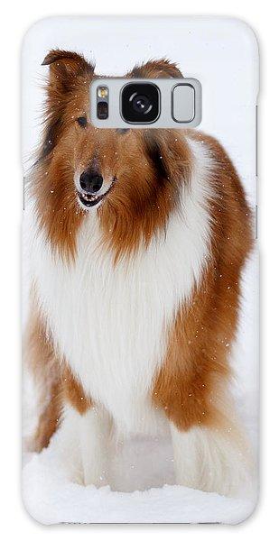 Lassie Enjoying The Snow Galaxy Case