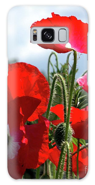 Last Poppies Of Summer Galaxy Case by Stephen Melia