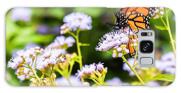 Late In The Season Butterfly Galaxy Case by Edward Peterson