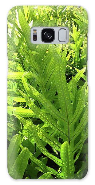 Lauae Fern Galaxy Case