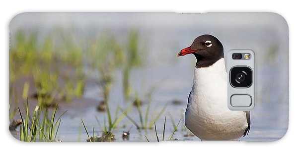 Laughing Gull On Taylors Creek Galaxy Case