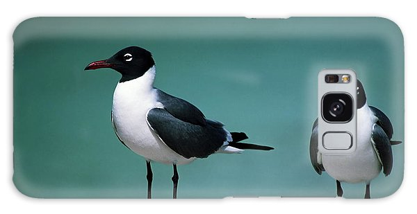 Laughing Gulls Galaxy Case by Sally Weigand