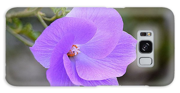 Galaxy Case featuring the photograph Lavender Flower by AJ Schibig