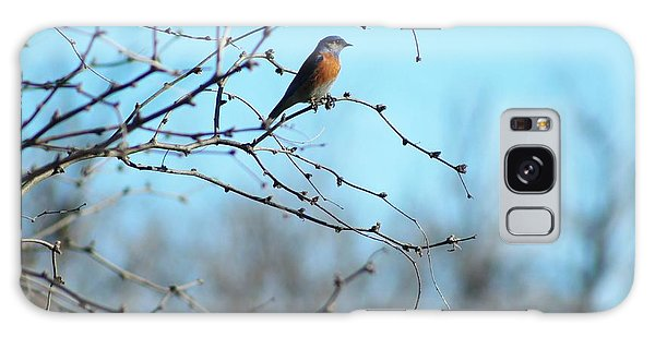 Lazuli Bunting Looks Out Galaxy Case