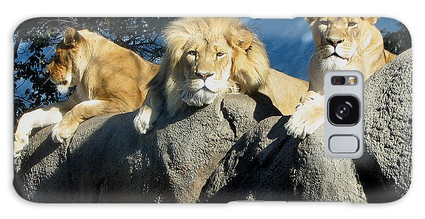 Lazy Day Lions Galaxy Case by George Jones