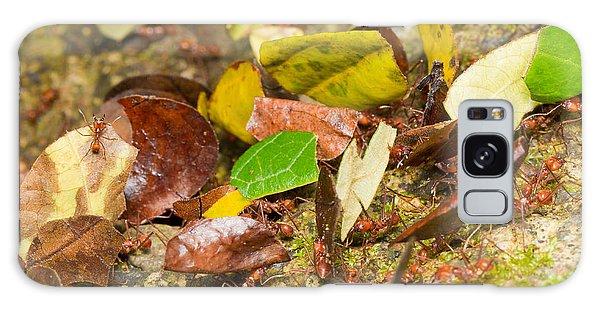 Leaf-cutter Ants Galaxy Case by B.G. Thomson