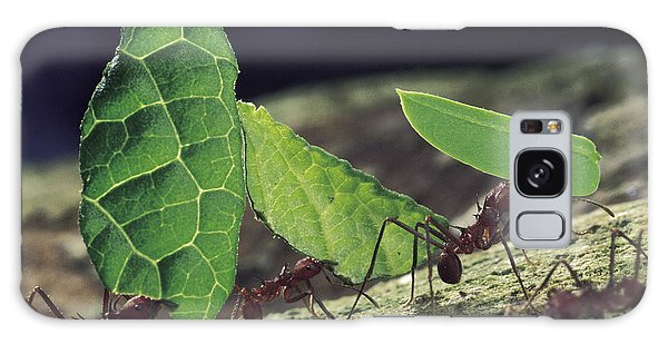 Leafcutter Ant Atta Cephalotes Workers Galaxy Case