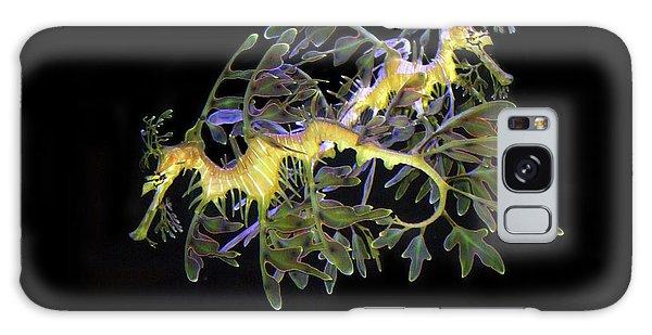 Leafy Sea Dragons Galaxy Case