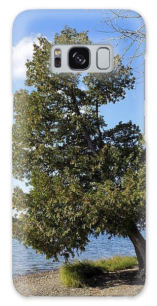 Aroostook County Galaxy Case - Leaning Cedar by William Tasker
