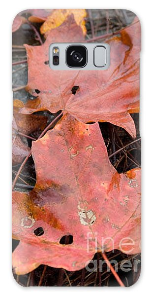 Leaves-old Leaves Galaxy Case