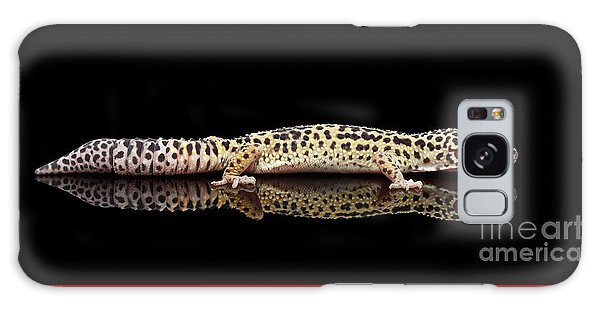 Leopard Gecko Eublepharis Macularius Isolated On Black Background Galaxy Case by Sergey Taran