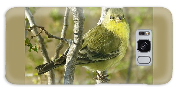 Lesser Goldfinch 1 Galaxy Case