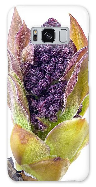 Lilac Bud Galaxy Case by Jim Hughes