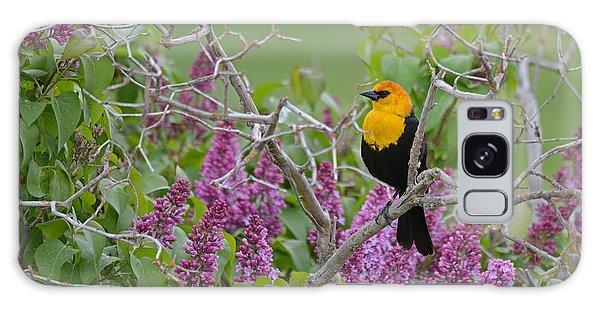 Lilacs And Yellowhead Blackbirds Galaxy Case