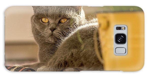 Lilli The Cat Galaxy Case