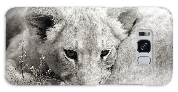Lion Cub Galaxy Case