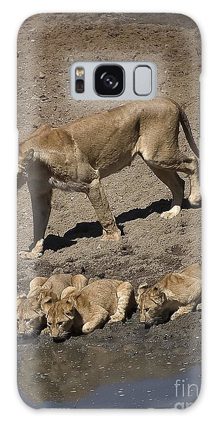 Lion Cubs And Mom Get A Drink Galaxy Case by Darcy Michaelchuk