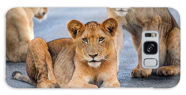 Lions Stare Galaxy Case