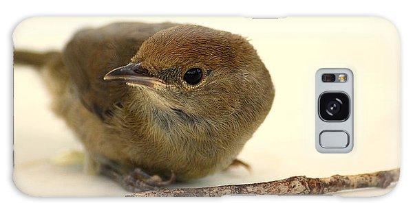 Little Bird 2 Galaxy Case