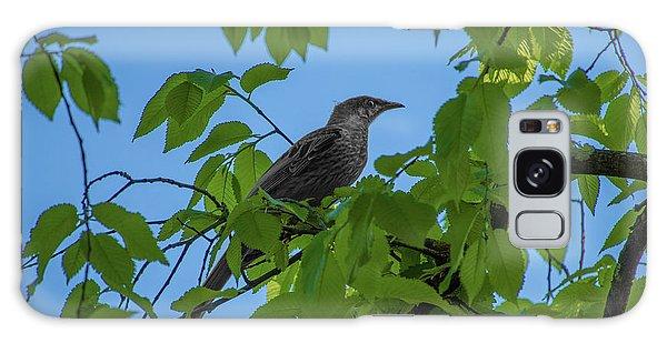 Little Bird In The Tree  Galaxy Case