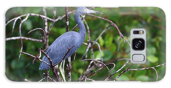 Little Blue At Trinidad's Caroni Swamp Galaxy Case