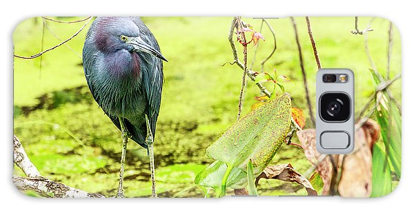 Little Blue Heron At Ollie's Pond Galaxy Case