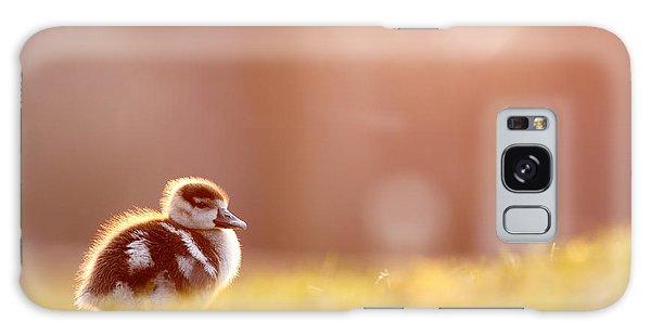 Gosling Galaxy Case - Little Furry Animal - Gosling In Warm Light by Roeselien Raimond