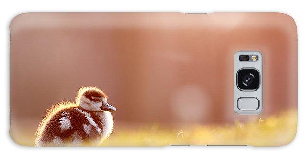 Goose Galaxy Case - Little Furry Animal - Gosling In Warm Light by Roeselien Raimond